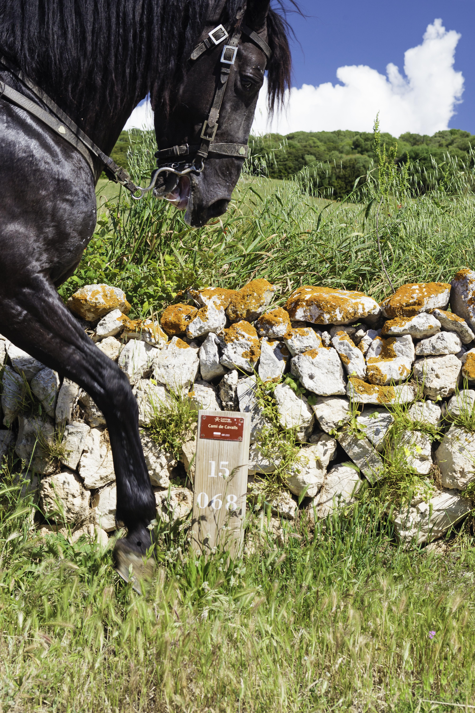 Menorca: Descubriendo su lado DOG friendly