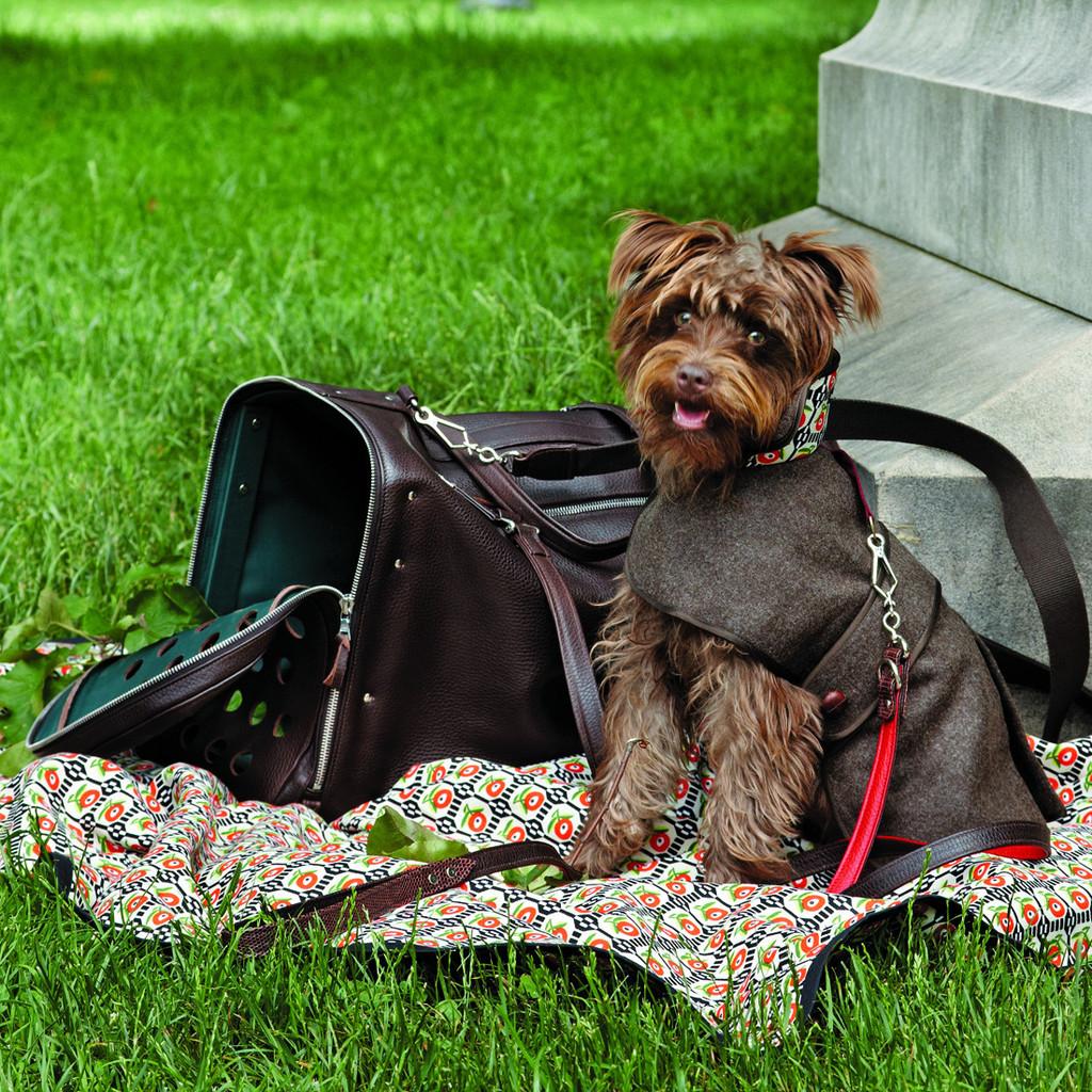 Guía para viajar con tu mascota