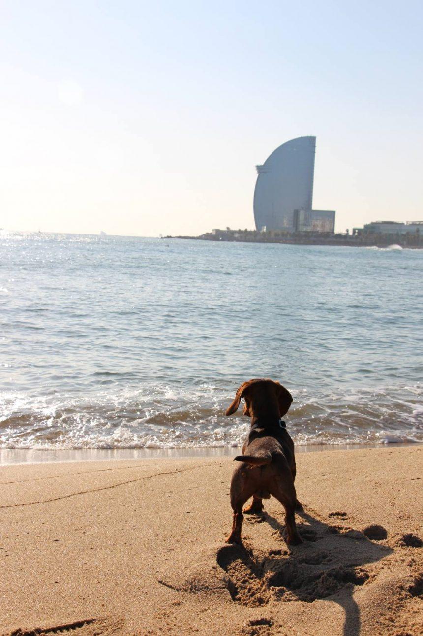 En 5 rutas por Barcelona con Eros