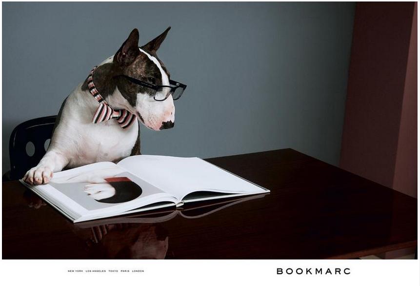 Neville Jacobs: El perro trendy del mundo de la moda