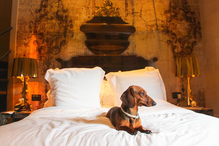 Vacaciones con tu perro: DIEZ hoteles para disfrutar juntos en España