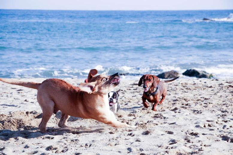 Barcelona: Playa para todos!