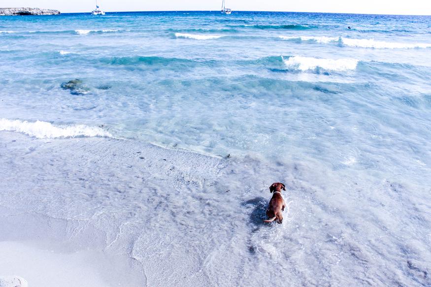Eros disfrutando del mar en Binigaus.