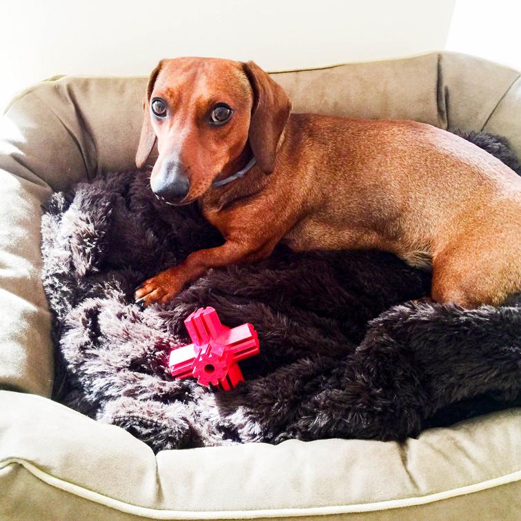 Eros estrenando cama, manta y juguete.