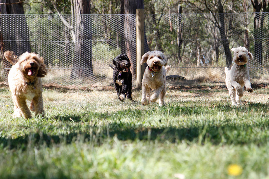 Es la hora de jugar en el DOGUE Country Retreat, Australia.