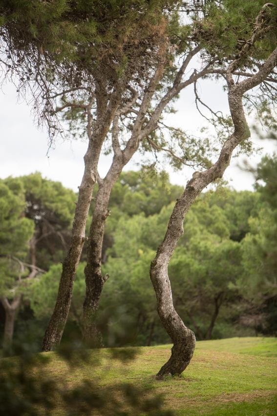 Campo de golf El Saler.
