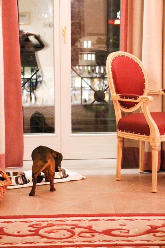 Eros comiendo en la suite junior del Sacher Salzburg.