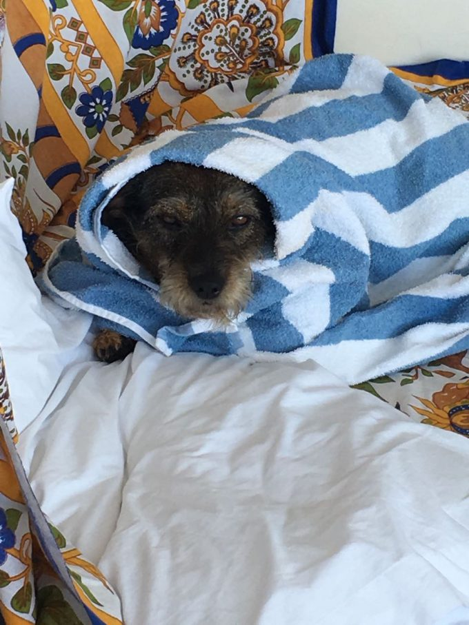 Bella después de su primer baño en Laguna Garzón.