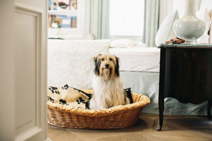 La cama de los perros que se hospedan en el Sacher.