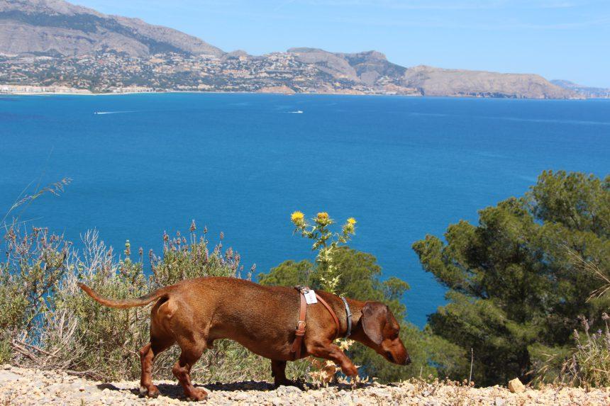 Parque Natural Sierra Gelada, ruta de senderismo mirando al Mediterráneo
