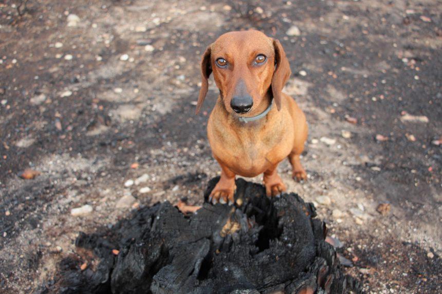 Dogfriendlytraveler.com está con GALICIA, ¿y tú?
