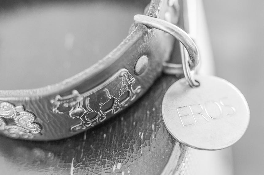 Chapa: un accesorio indispensable para un amor incondicional