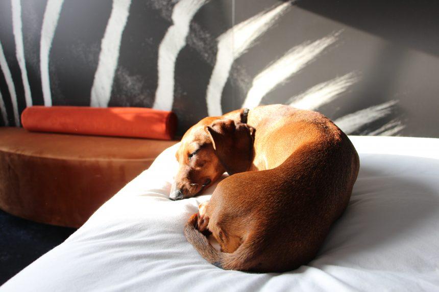 NYX Hotel Madrid, la nueva dirección arty y dog friendly de la capital