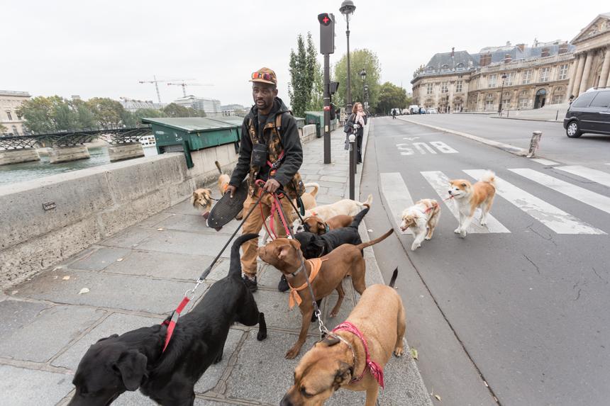 Yoopies ofrece cuidadores de mascotas a un precio ventajoso