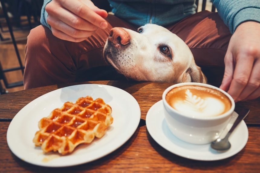 8 restaurantes dog friendly en Oporto recomendados por la guía Mygon