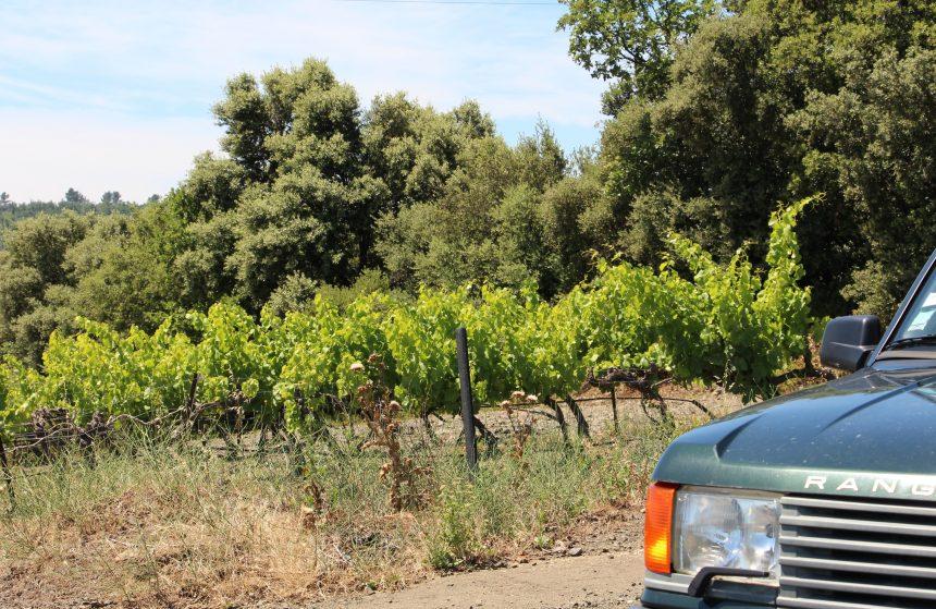 Wine safari por Villa Baulieu, el viñedo lidera la región de Rognes