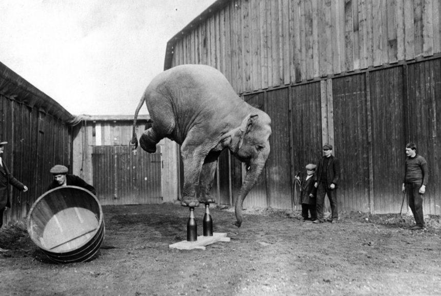 Los circos con animales deben acabarse urgentemente