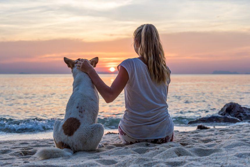 Encuentra chollos para viajar con tu perro