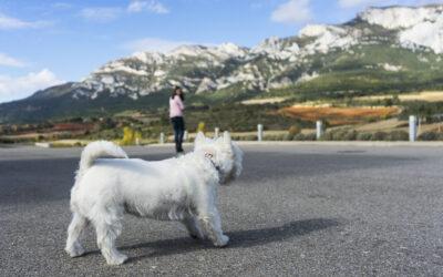 Bodegas Lozano: enoturismo con perro en Rioja Alavesa