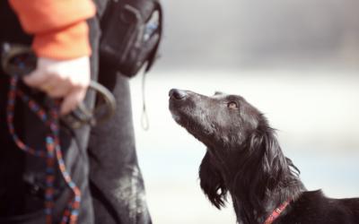 Educador Canino: un perro también necesita recibir educación